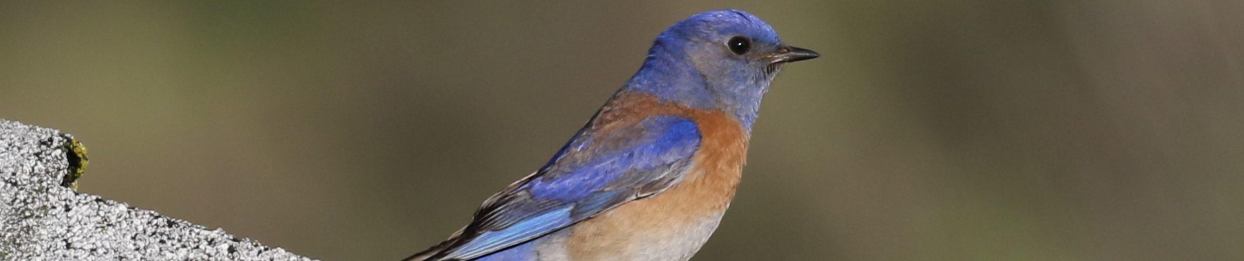 Conejo Valley Audubon Society