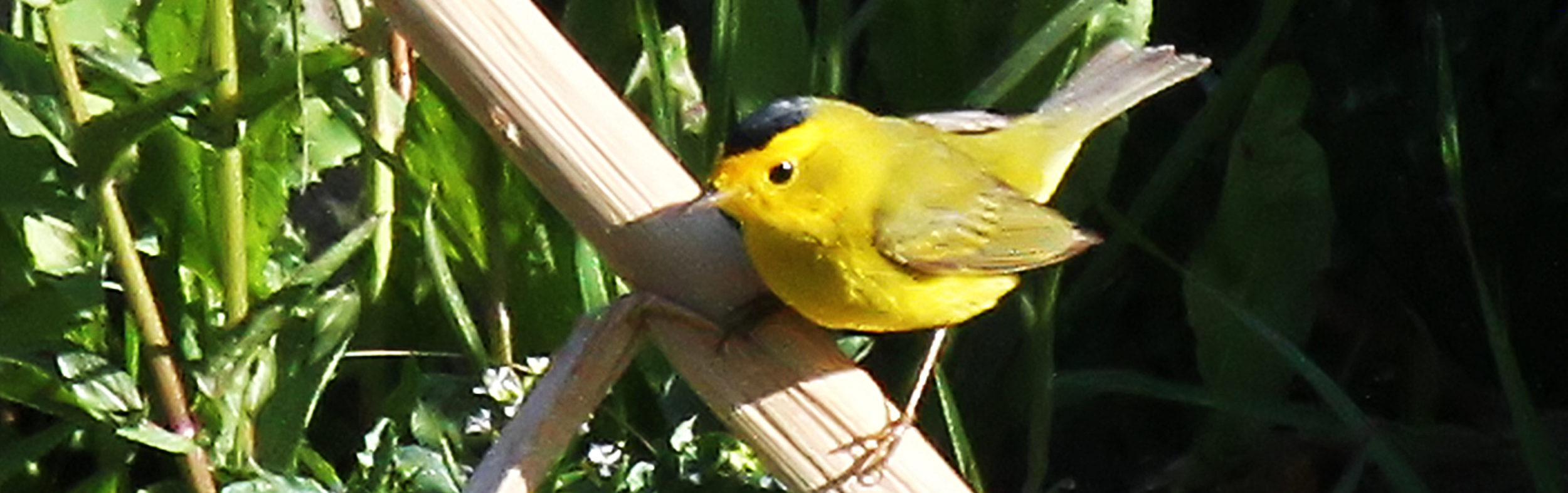 Conejo Valley Audubon Society
