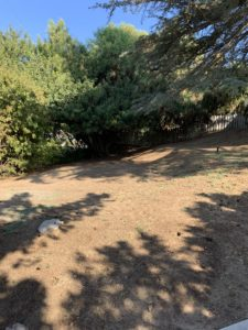 Lawns To Habitat - Before